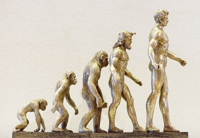 Evolution-of-human-beings